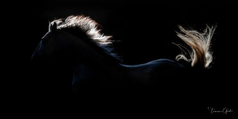 Florida Friesian and Iberian Horse Workshop March 26th- March 30 2021