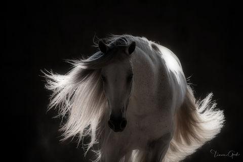 Andalusian Horse Extravaganza print