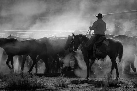 A black and white photograph of an American Cowboy pushing a herd of horse surrounded by dust.