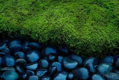 Moss on the Rocks print