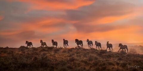 Mustang Moments  print