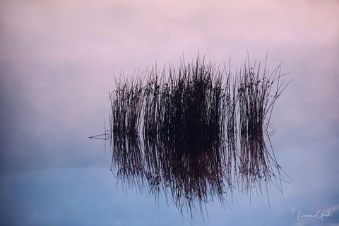Nature Therapy | Reed Reflection print