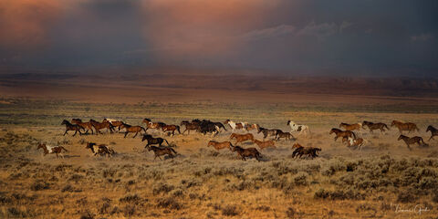 Thunder Rolls Wild Horse herd print