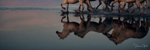 Equine Mirror print
