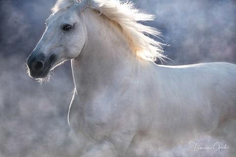 Lusitano Horse print