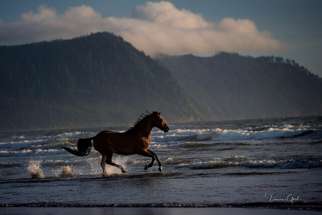 A fine art limited edition photograph of a horse running through the waves, ocean and surf in Oregon.