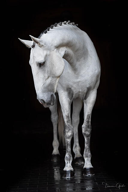 Luxury gallery quality black and white horse, equestrian fine art photo prints for sale.