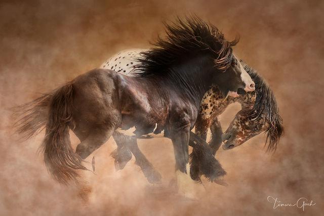 Playful Gypsy Horses