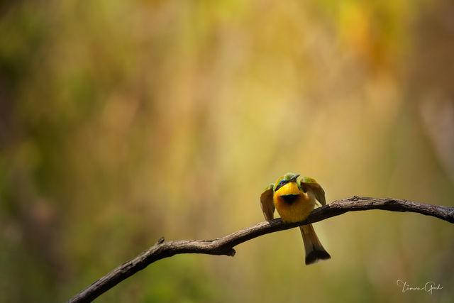 Uncaged Bird