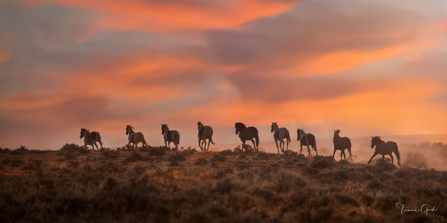 Mustang Moments
