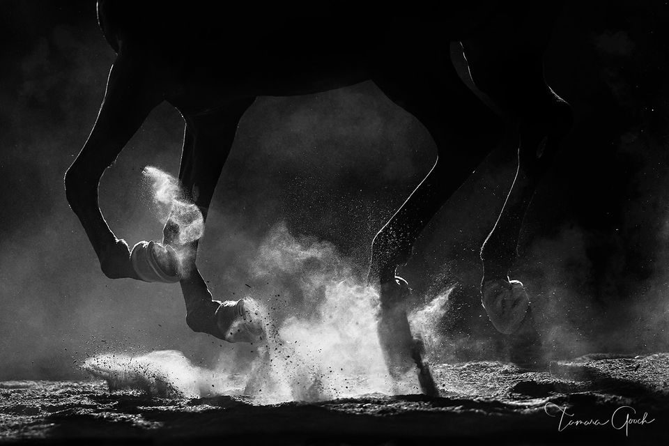 black and white, dust, backlight, hooves, horse power, powerful, hooves, dust, horse, horses, print, horse photography, equine, equine fine art, equestrian, lifestyle, luxury, Arabian, BNW, art, buy,