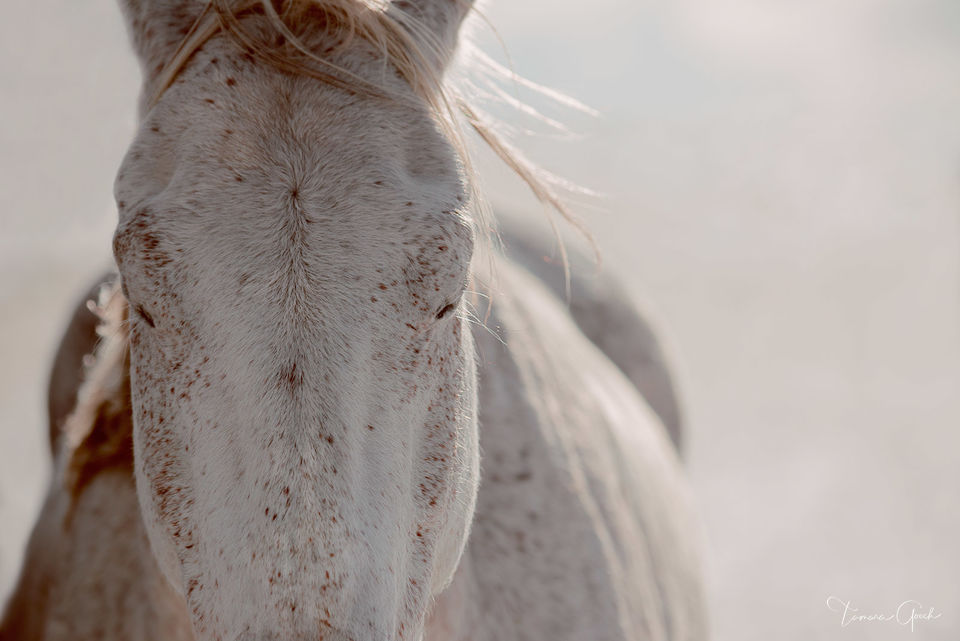 horse, horse art, art, equestrian, home, decor, design, luxury, Zen, tranquil , equine, closed eyes, horse photos, flea bitten, spotted, equus, cheval, caballos, glow, calmness, beautiful, best, buy,