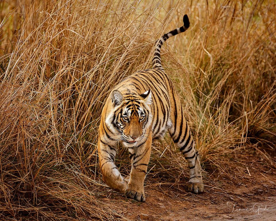 Incredible Wildlife Photography