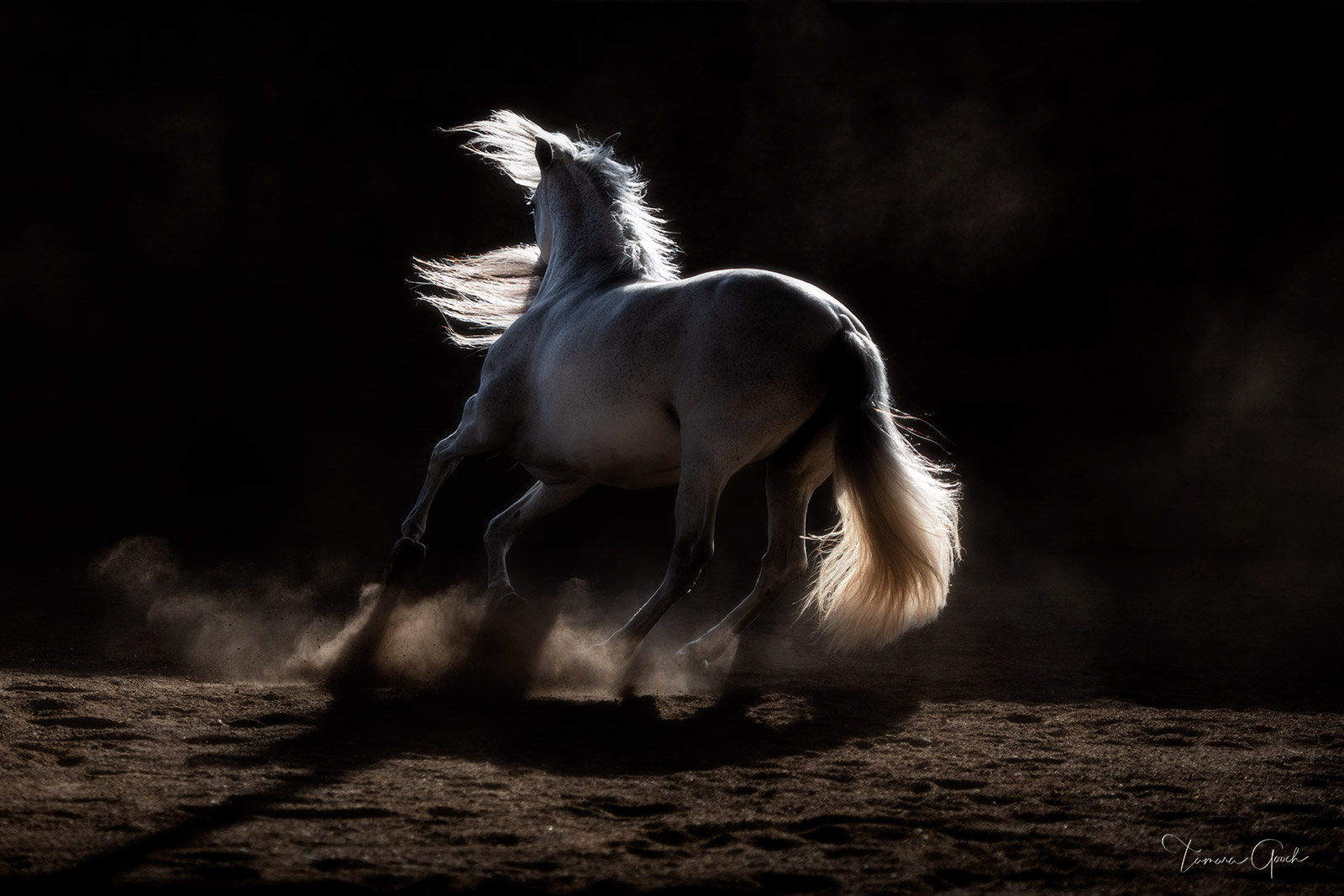 a photograph of a horse spinning around at liberty in low light in an indoor arena.