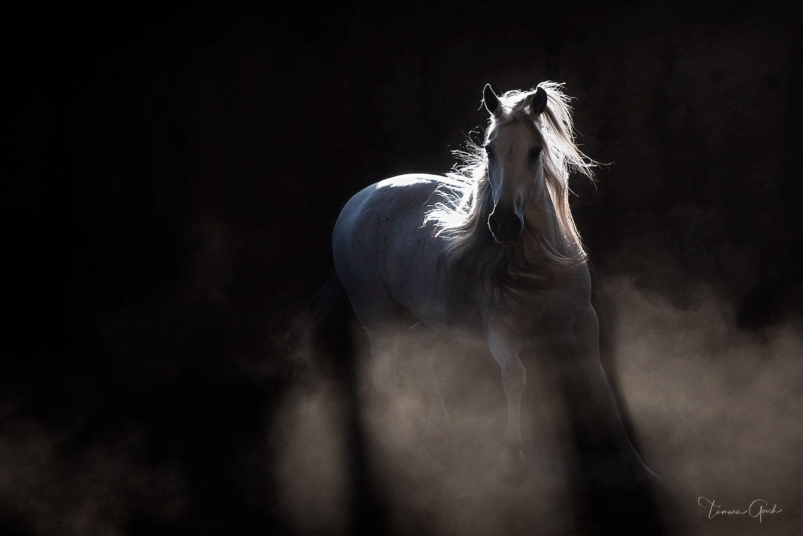 A limited edition luxury fine art print in black and white of a Andalusian horse photographed in low light surrounded by dust.