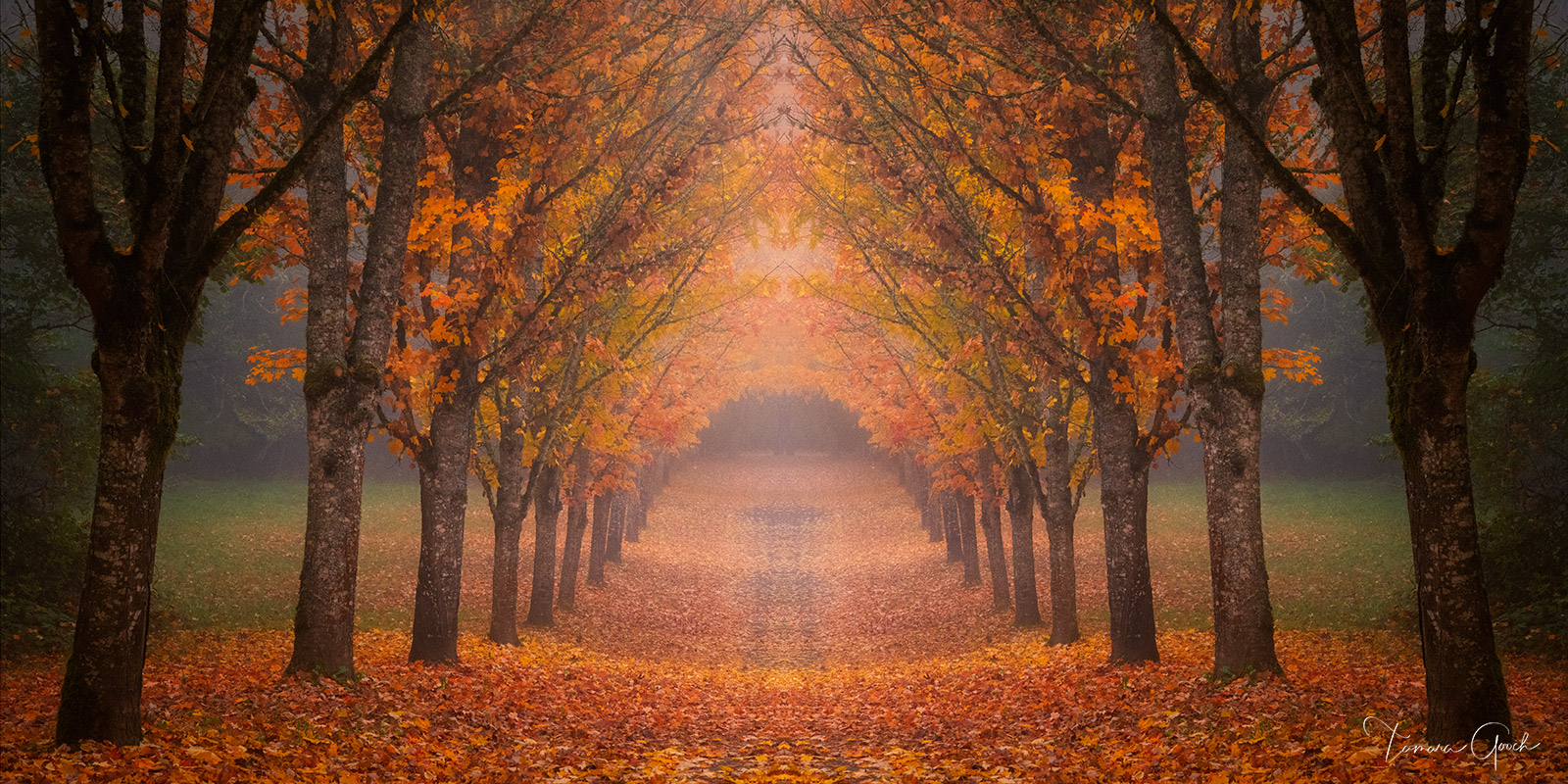Limited Edition Print of 50 Elevate your home or office with a stunning tree lined view of Autumn splendor.  This photograph...
