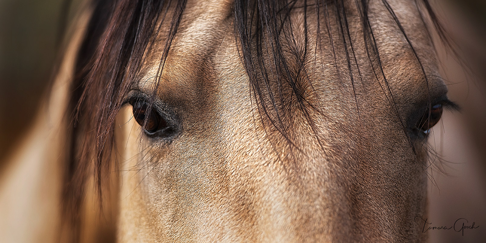 equus, cheval, caballos, buckskin, eyes, closeup, pano, luxury, home decor, interior design, horse, equine, art, print, fine, art, limited, edition, fire place, living room, , photo