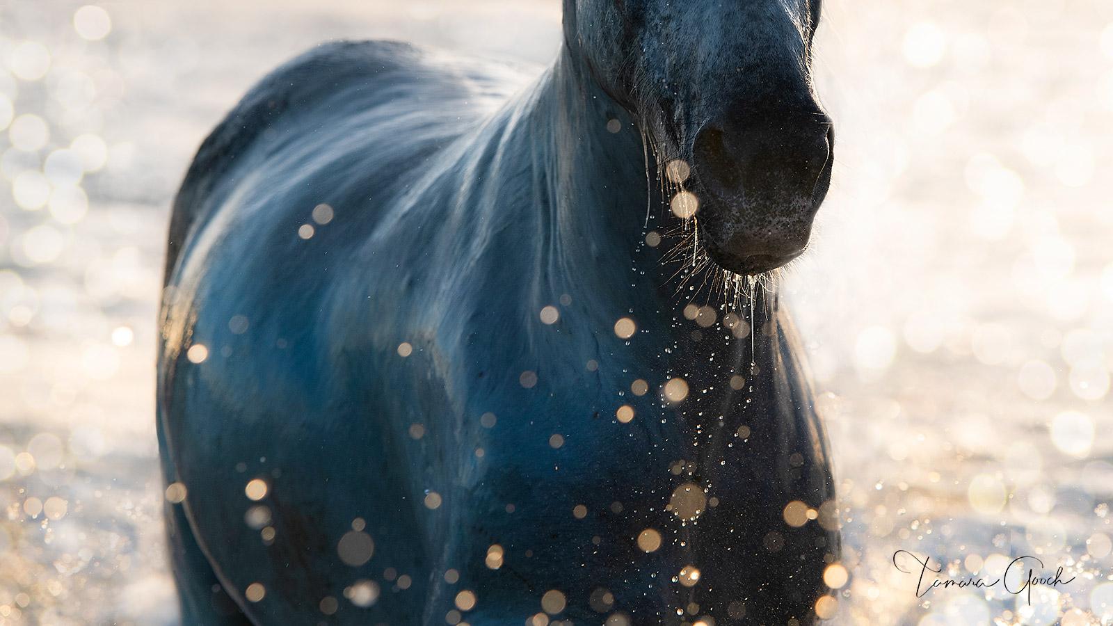 Camargue, bokeh, water, splashing, sea, ocean, Mediterranean, France, Provence, print, limited edition,  horse, white, horse photos, horse art, horse photography, equine, equine photography, fine art,, photo