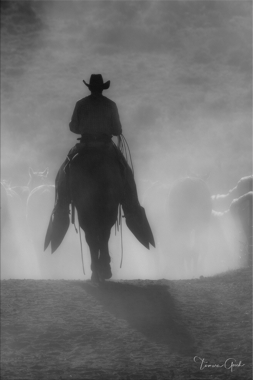 Black and white Western Cowboy photo print of a cowboy pushing horses surrounded by dust.