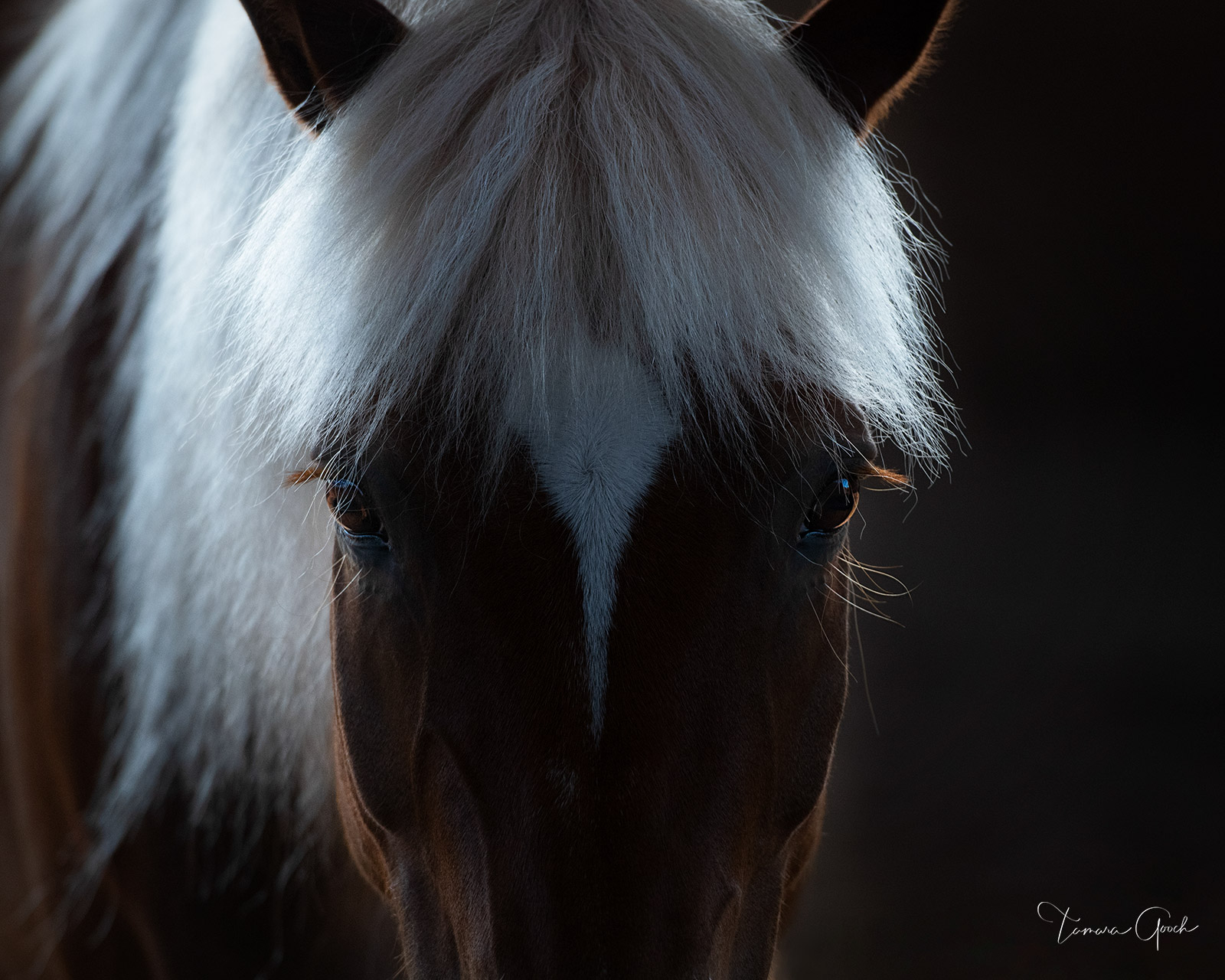 """Limited Edition Print of 50 """"Talk to Me"""" is an intoxicating piece of Equine fine art. This photograph captures the intuitive..."""
