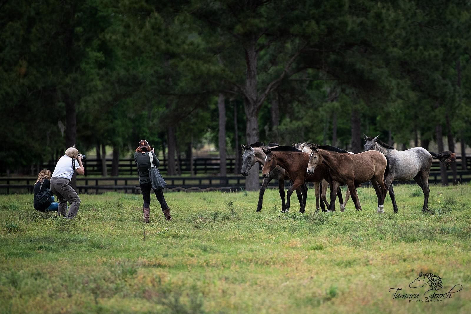 Equine Photography Workshop