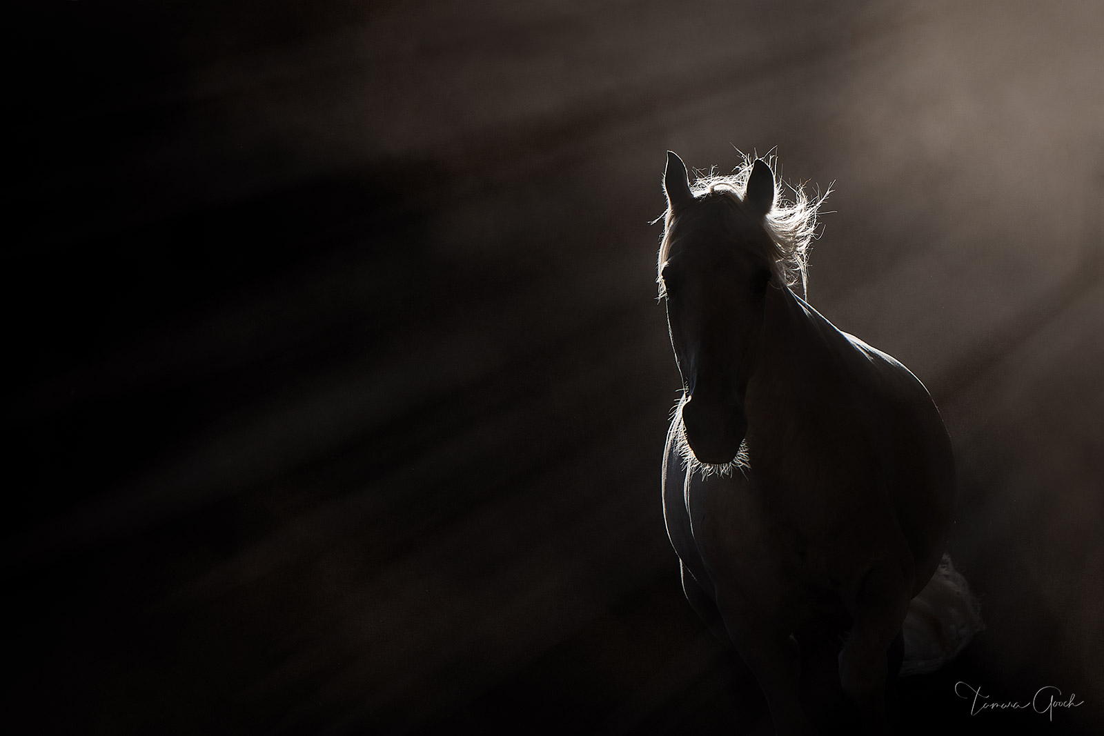 Black and white horse photo print. Luxury gallery quality ready to hang wall art, equestrian home decor, for sale