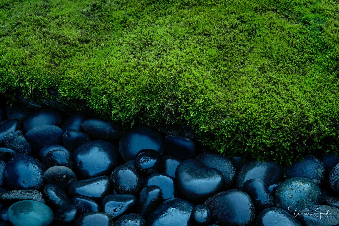 rocks, stones, moss, zen garden, zen, nature, landscape, relax, tranquility, Japenese, Northwest, Pacific Northwest, Oregon, landscape, fine art, art, limited editon, interior design, home decor, deco, photo