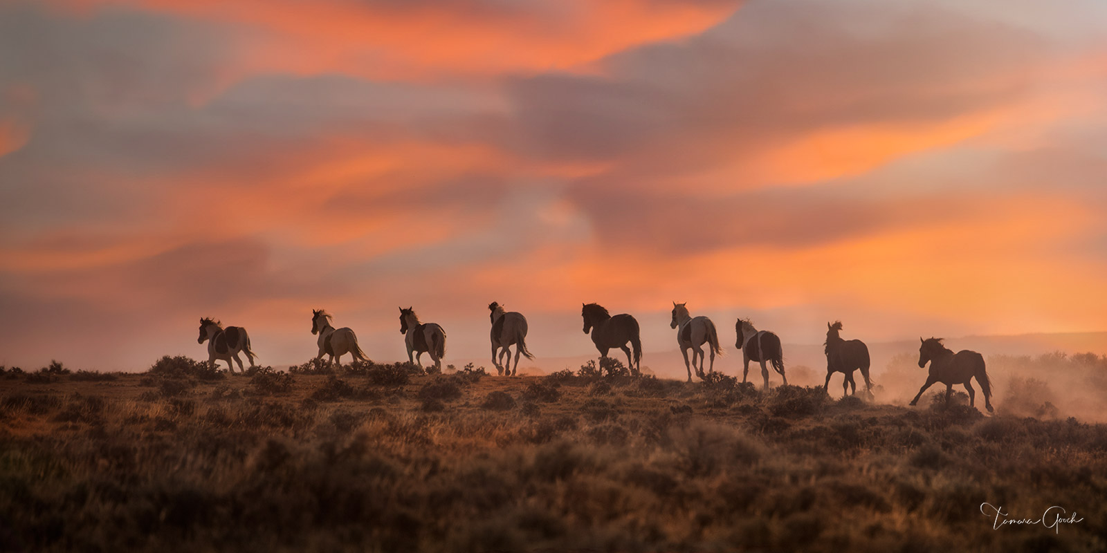 Limited Edition Horse Print of 50 Mustang Moments, a fine art photograph of a herd of wild mustang horses heading off into the...