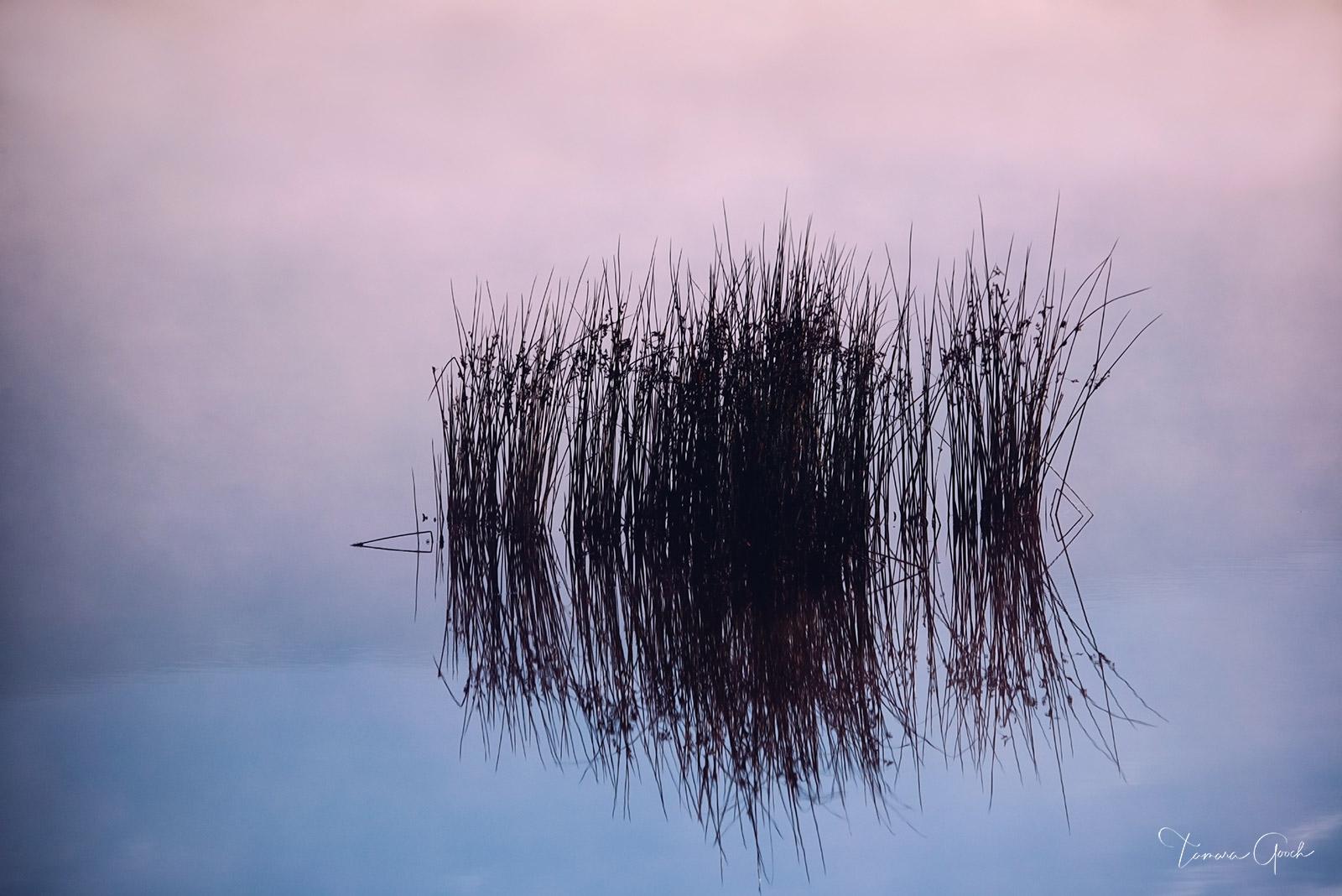 nature, landscape, grasses, fog, water, pond, reflection, reeds, fine art, photography, prints, nature, therapy,  calm, zen, image, images, photo, photos, photograph, buy, for sale, aluminum, canvas, , photo