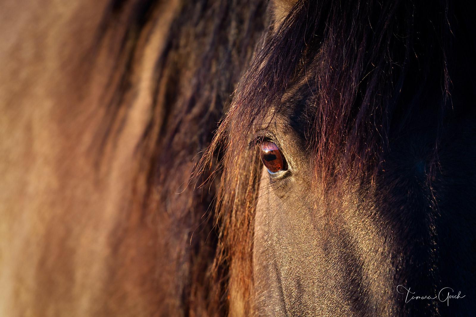 eye, horse eye, Sulphur Mustang, Mustang, horse, horses, photography, equine, equestrian, lifestyle, close up, cheval, caballos, wall art, art, interior, design, home, decor, rustic, farmhouse, modern, photo