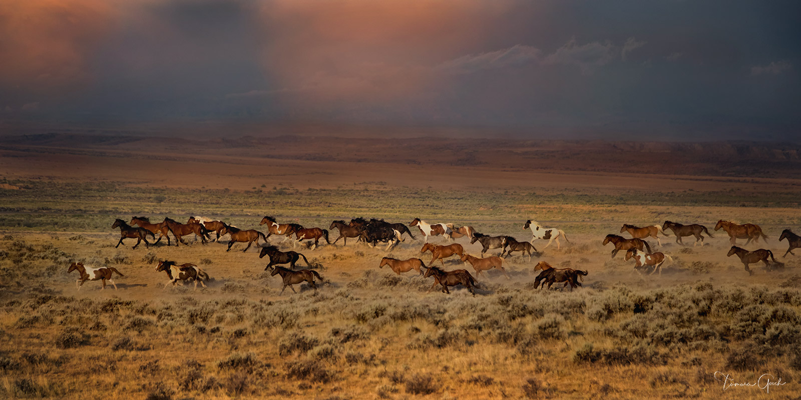 Limited Edition print of 50 Thunder Rolls is a photo taken while photographing the Wild Horse herds near Cody Wyoming in early...